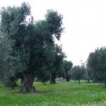 Consigli di web marketing turistico in Puglia