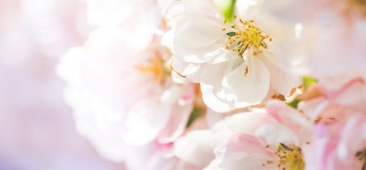 Il significato dei fiori nelle culture